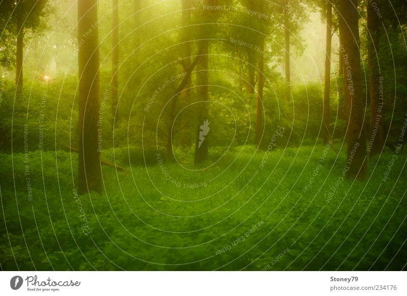 Dämmerung im Auwald Natur grün Baum Pflanze Einsamkeit ruhig Wald Landschaft Gras Frühling träumen Sträucher Frieden fantastisch Baumstamm Märchen