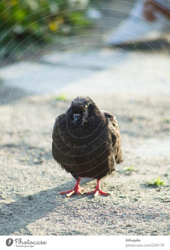 was guckst du? Natur Tier Umwelt Vogel Zufriedenheit Wildtier stehen Coolness genießen Wachsamkeit Taube Schnabel selbstbewußt gefiedert