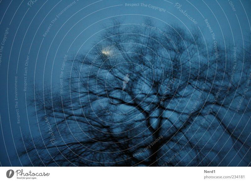 Zwielicht Himmel blau Baum Pflanze Winter Einsamkeit schwarz Mond Baumkrone Geäst Mondschein laublos