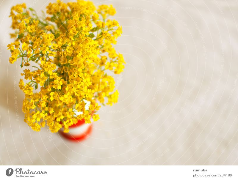 Frühlingsblümlis Natur Pflanze Blumenstrauß leuchten niedlich schön gelb Fröhlichkeit Lebensfreude Frühlingsgefühle Sympathie Freude Blüte Vase Farbfoto