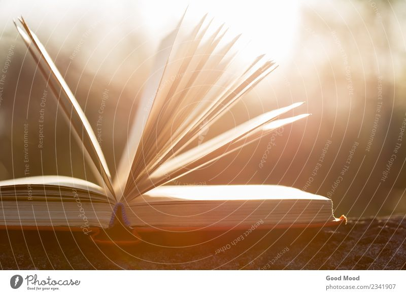 Natur alt Sommer weiß Baum Herbst Holz Schule oben Freizeit & Hobby offen Buch Geschenk Idee Papier Studium