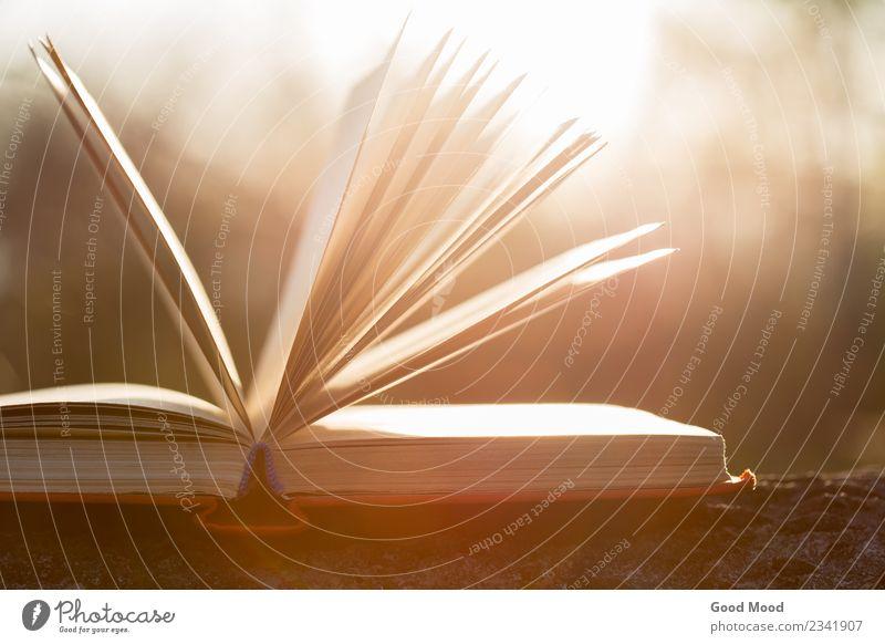 offenes Buch unter Sonnenuntergang Sonnenlicht Freizeit & Hobby lesen Sommer Wissenschaften Schule Studium Büroarbeit Natur Herbst Baum Papier Holz alt