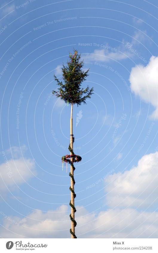 Maibaum Himmel Baum Wolken Frühling Feste & Feiern groß hoch Dekoration & Verzierung Jahrmarkt Schönes Wetter Tradition altmodisch
