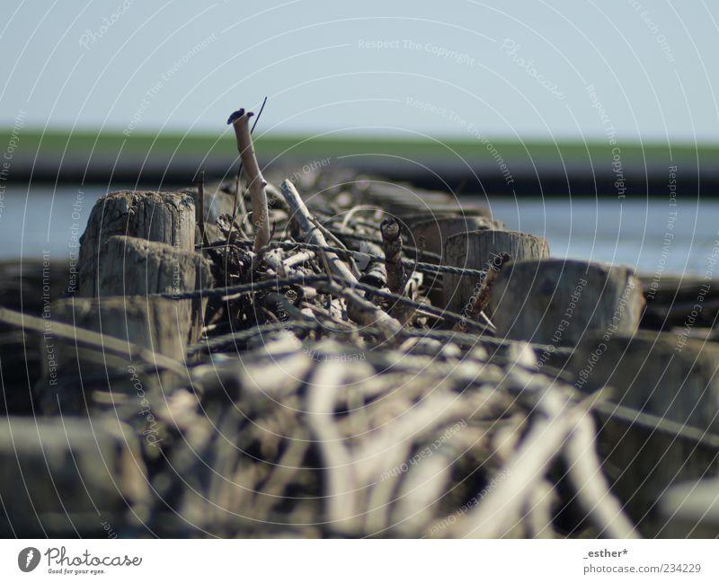 Holz im Meer blau Wasser Ferien & Urlaub & Reisen ruhig Küste Buhne Holzpfahl Uferbefestigung Holzstab