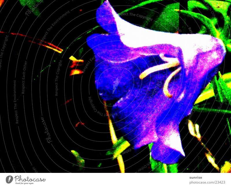 Blume in der Nacht Natur Blume blau Garten