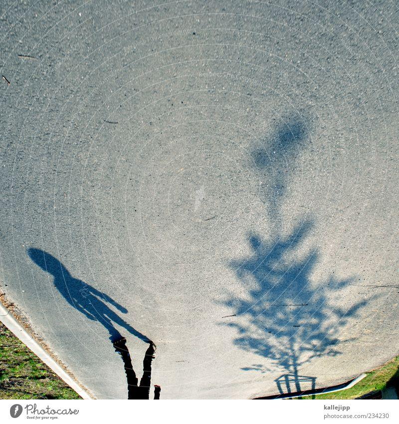 big spender Mensch Kind Junge 1 Bewegung fahren Rollschuhe Inline skates Skateboarding üben Baum Straße Sonnenlicht Farbfoto Gedeckte Farben Außenaufnahme Licht