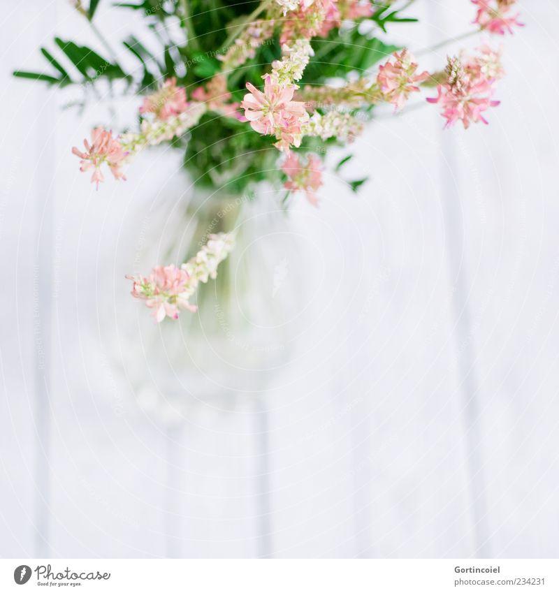 Wiesenblumen Pflanze Blume Blüte hell schön Blumenstrauß Vase Blumenvase Dekoration & Verzierung rosa grün weiß Holztisch Schmetterlingsblütler Saat-Esparsette