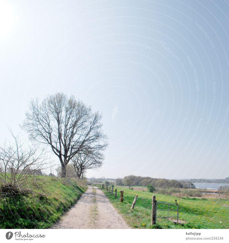 ortsausgang Himmel Wasser Baum Umwelt Frühling Luft Klima Ziel Schönes Wetter Fußweg Zaun Wege & Pfade Wolkenloser Himmel Schleswig-Holstein Begrenzung Schlei