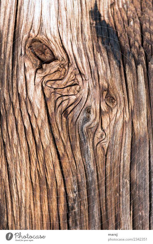 Textur | knorrig Maserung Riss Holz alt authentisch verwittert eigenwillig rustikal Hintergrundbild Farbfoto Gedeckte Farben Außenaufnahme Nahaufnahme abstrakt