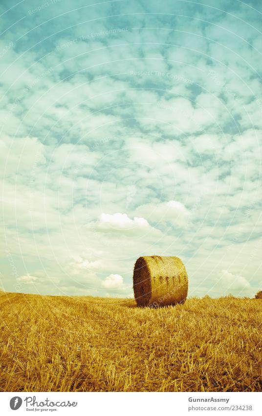 Erntezeit Natur Himmel blau Sommer gelb Feld Umwelt gold Perspektive natürlich Schönes Wetter ökologisch Rolle nachhaltig Heu Strohballen