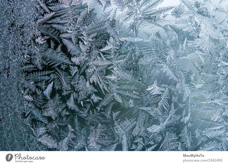 Natur Weihnachten & Advent blau schön Winter natürlich Schnee hell Wetter frisch Klima neu Frost Jahreszeiten Beautyfotografie gefroren