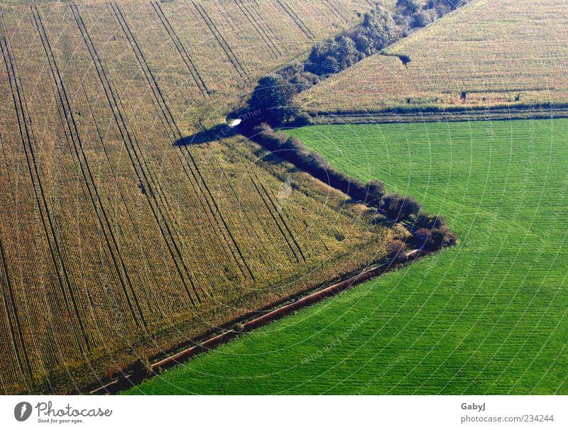 zack, zack Landschaft Erde Herbst Maisfeld Feld Zeichen Pfeil außergewöhnlich natürlich braun gelb grün Wandel & Veränderung Luftaufnahme Menschenleer