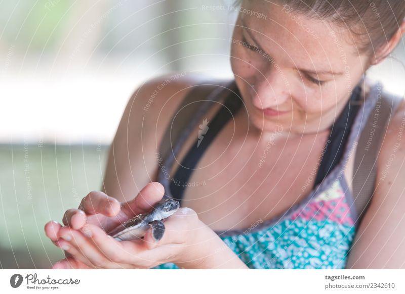 Frau Natur Ferien & Urlaub & Reisen Sommer schön Hand Tier natürlich Tourismus Angst Idylle Lächeln warten beobachten Postkarte erleuchten