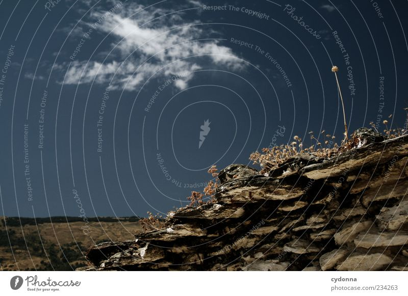 Bessere Aussichten Himmel Natur Pflanze Sommer Einsamkeit Ferne Umwelt Leben Wand Freiheit Bewegung Mauer träumen Wachstum einzigartig Ziel