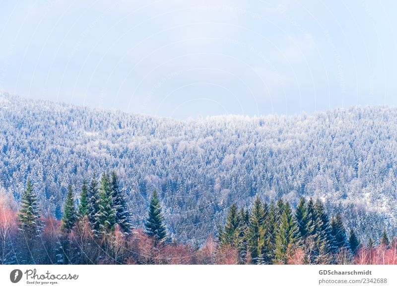 Farben im Winter Umwelt Natur Landschaft Pflanze Himmel Schönes Wetter Eis Frost Schnee Baum Wald Hügel Holz Erholung natürlich schön blau grau grün orange rot