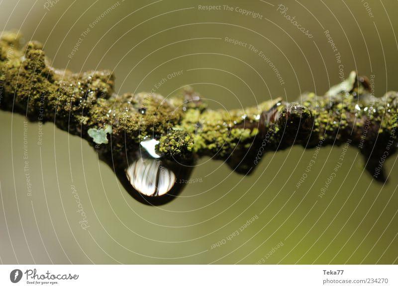 Tropfenwelt Umwelt Natur Wasser Wassertropfen Klima Klimawandel Wetter schlechtes Wetter Unwetter Regen Pflanze Moos klein nah nass natürlich braun grün weiß