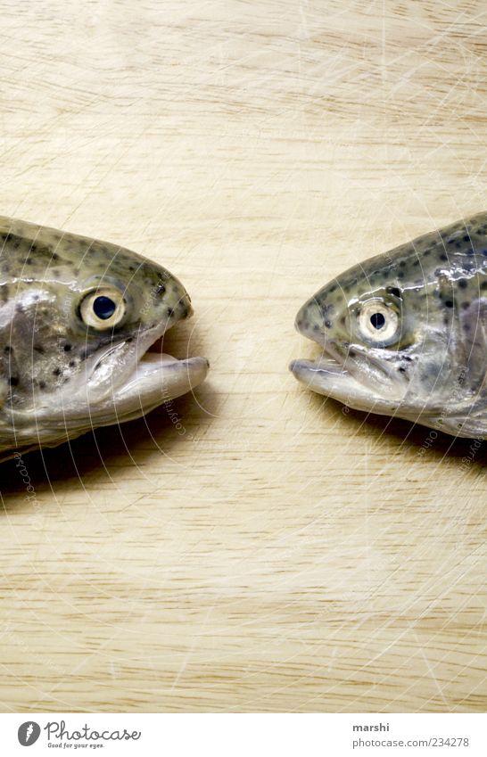 Tratschweiber Lebensmittel Fisch Ernährung Forelle Blick Tier Holzbrett Ekel Maul Farbfoto Tierporträt Totes Tier Regenbogenforelle Fischauge Glätte