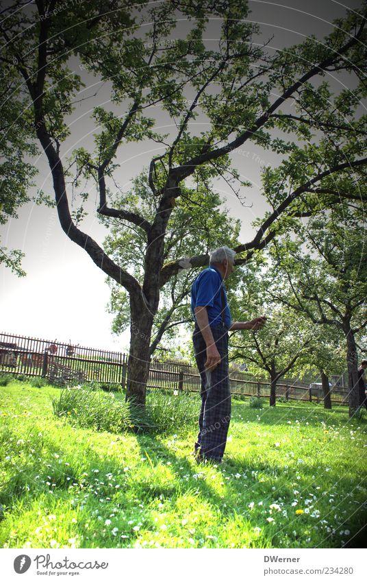 Großeltern Mensch alt blau grün Baum Pflanze Leben Wiese Landschaft Senior Gras Garten Frühling Zufriedenheit warten maskulin