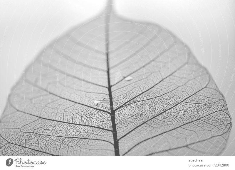 filigran verästelt verzweigt fein dünn Strukturen & Formen Ordnung Blatt Blattadern Natur Schwarzweißfoto Grauwert graphisch Nahaufnahme naturkunst schön
