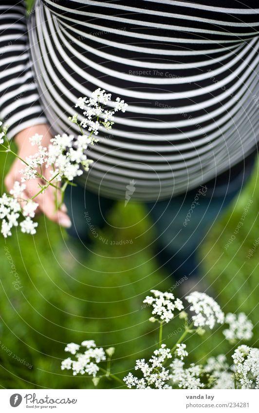 Streifen machen schlank Mensch Frau Jugendliche schön Blume Erwachsene Wiese feminin Gras Glück Junge Frau Familie & Verwandtschaft Zufriedenheit Kindheit