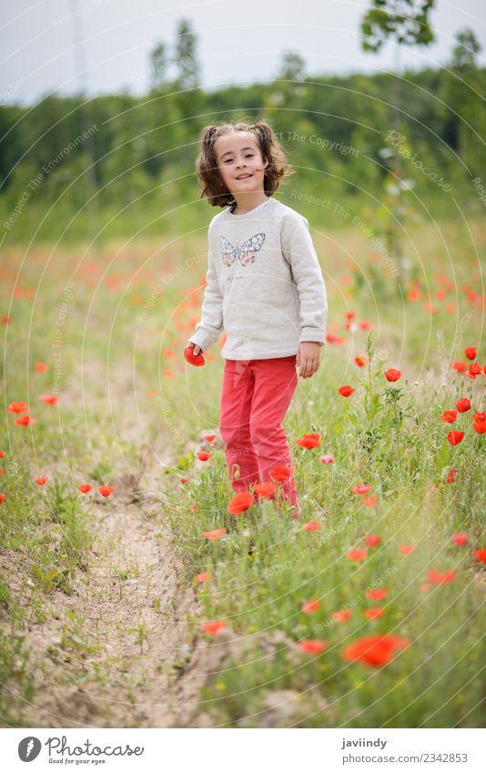 Kleines Mädchen mit vier Jahren, das Spaß auf einem Mohnfeld hat. Freude Glück schön Leben Spielen Kind Mensch Frau Erwachsene Kindheit 1 3-8 Jahre Natur Blume