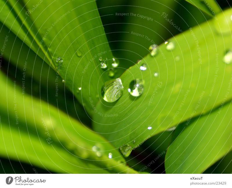 kleine Tröpchen Natur Wasser grün Pflanze Blatt Tropfen Faser