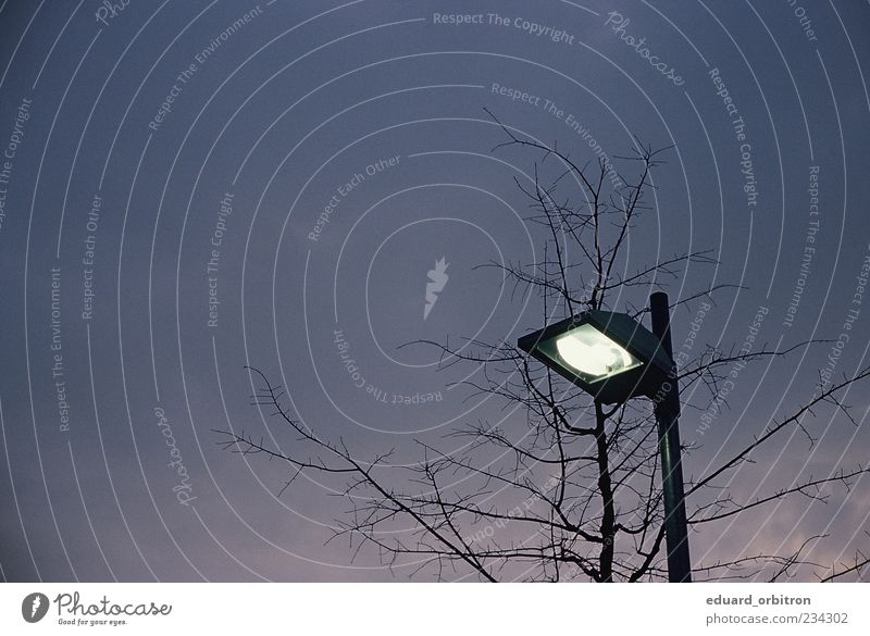 The Shimmering Hour Himmel Baum dunkel Lampe leuchten Laterne Straßenbeleuchtung Zweige u. Äste Wolkenhimmel
