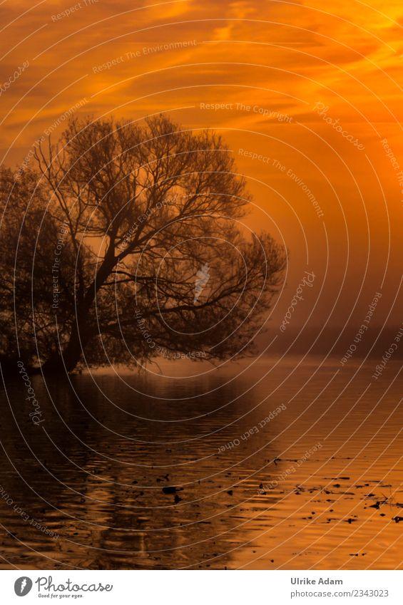 Morgendämmerung im Teufelsmoor bei Worpswede Natur Landschaft Baum Einsamkeit ruhig Winter dunkel schwarz Wärme Frühling Traurigkeit Gefühle Deutschland See