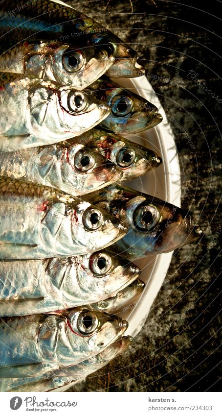 Fischig Duft nass schleimig silber gleich Farbfoto Nahaufnahme Tierporträt Reflexion & Spiegelung Totes Tier viele Kopf Fischauge Eimer Vogelperspektive