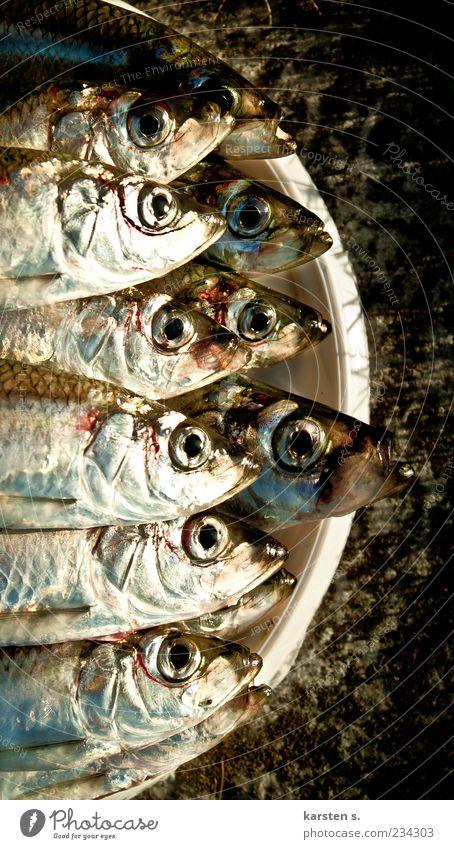 Fischig Kopf nass Fisch viele Duft silber gefangen gleich Eimer Fischauge schleimig Schuppen Totes Tier