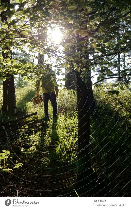 Suche im Wald Mensch Natur schön Sonne Sommer Freude Blatt Einsamkeit Erholung dunkel Gras Zufriedenheit Angst natürlich authentisch