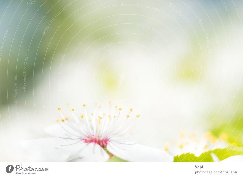 Natur Pflanze blau Sommer schön Farbe grün weiß Baum Blume Blatt gelb Umwelt Blüte Frühling natürlich