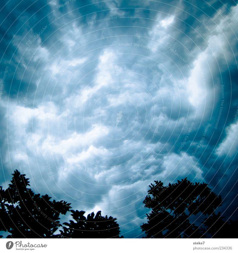 Wasserhimmel Himmel Gewitterwolken Sommer schlechtes Wetter Unwetter Sturm Baum bedrohlich blau grau Angst Unglaube chaotisch Wandel & Veränderung Silhouette
