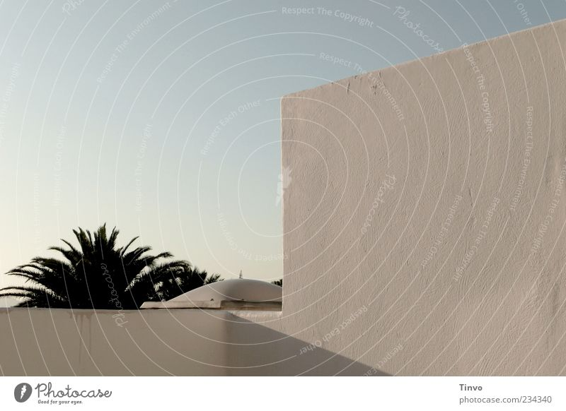 Spanischer Morgen Himmel Sommer Schönes Wetter Pflanze exotisch Mauer Wand Fassade Palme Terrasse Dach Gebäudeteil Lanzarote Kanaren Wolkenloser Himmel Farbfoto