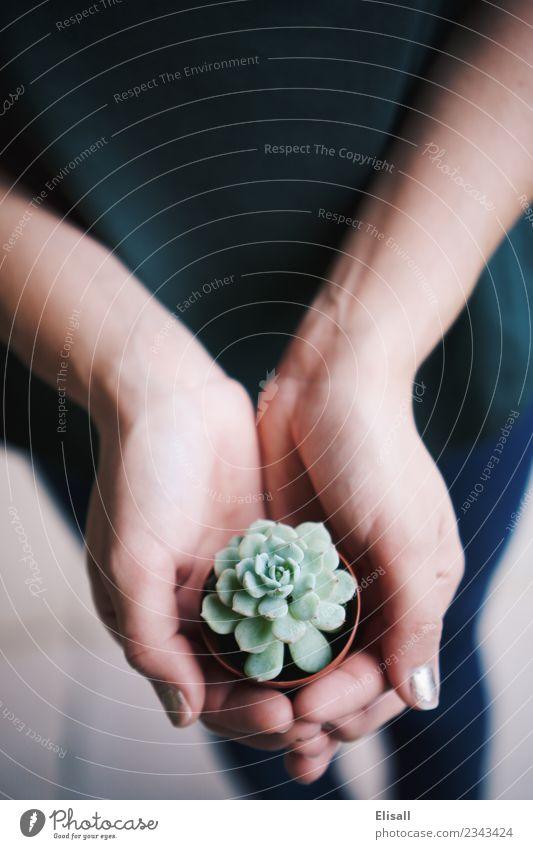 Sukkulente Liebe Lifestyle Freizeit & Hobby Garten Pflanze Frühling Topfpflanze Dienstleistungsgewerbe Sukkulenten Gartenarbeit Leben Wachstum Hand grün