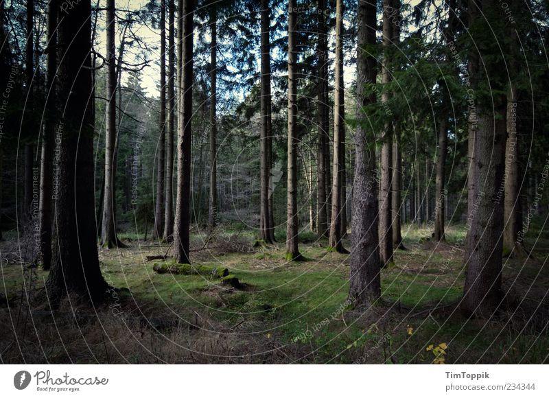 There Will Be No Dawn Umwelt grün Wald Baum Baumstamm Waldboden Deutschland dunkel Einsamkeit Waldlichtung Außenaufnahme Menschenleer