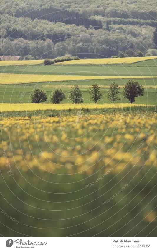 Landscape Natur Baum Pflanze ruhig Wald Ferne Erholung Umwelt Leben Landschaft Gras Frühling Zufriedenheit Feld Wachstum Romantik
