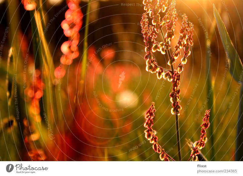 Frühlingsgeflüster Natur Schönes Wetter Blume Gras Zufriedenheit Frühlingsgefühle Vorfreude Optimismus Hoffnung Romantik Sehnsucht Farbfoto Außenaufnahme