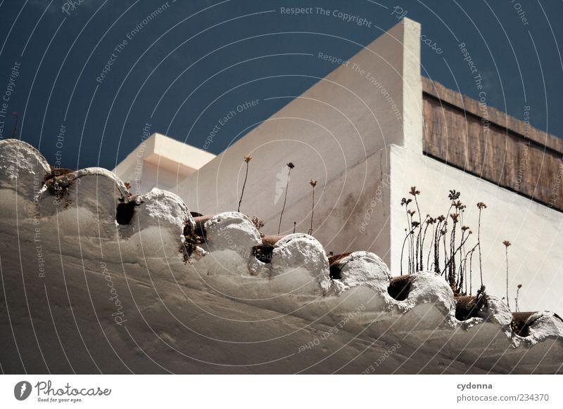 Wildwuchs harmonisch Wohlgefühl ruhig Freiheit Umwelt Wolkenloser Himmel Pflanze Blume Haus Mauer Wand Fassade Dach Einsamkeit einzigartig entdecken Hoffnung