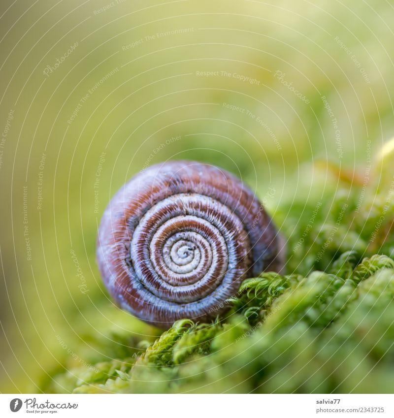 Häuschen im Moos Natur Pflanze grün natürlich außergewöhnlich braun Stimmung Erde ästhetisch einzigartig rund weich Schutz Schnecke Spirale