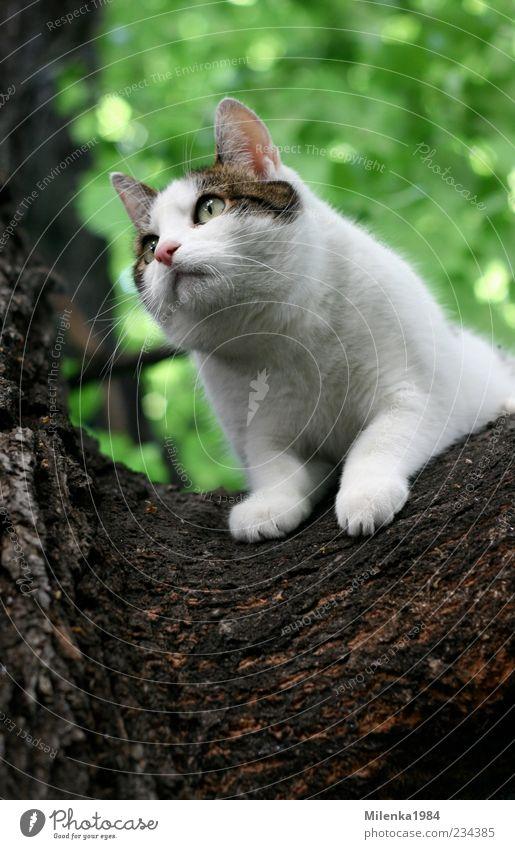 Will runter! Natur Baum Tier Haustier Katze 1 Neugier niedlich oben weiß Angst Klettern Blick festhalten herunterkommen Farbfoto Außenaufnahme