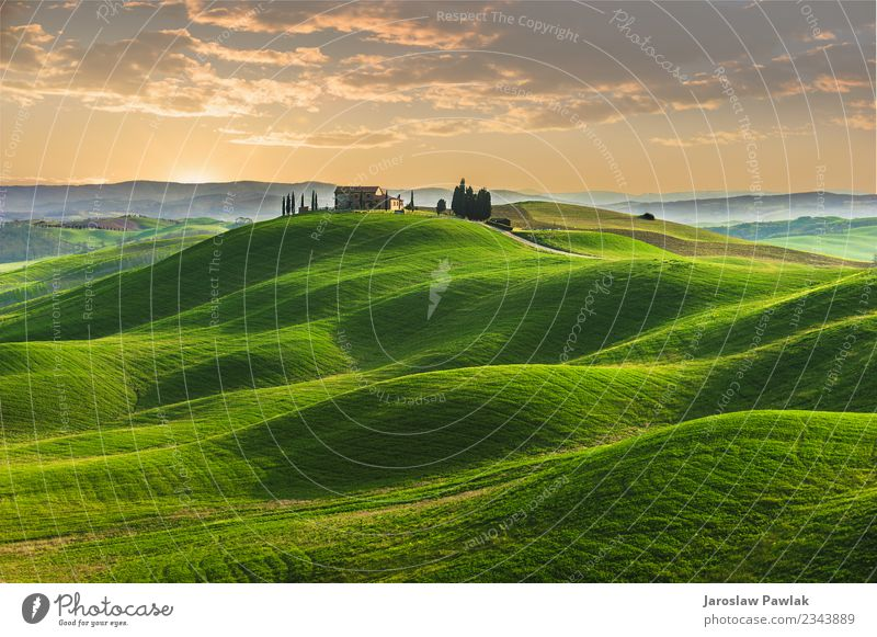 Frühling in den Feldern der Toskana bei Sonnenuntergang schön Sommer Haus Natur Landschaft Pflanze Himmel Wolken Baum Gras Park Wiese Hügel blau grün Italien