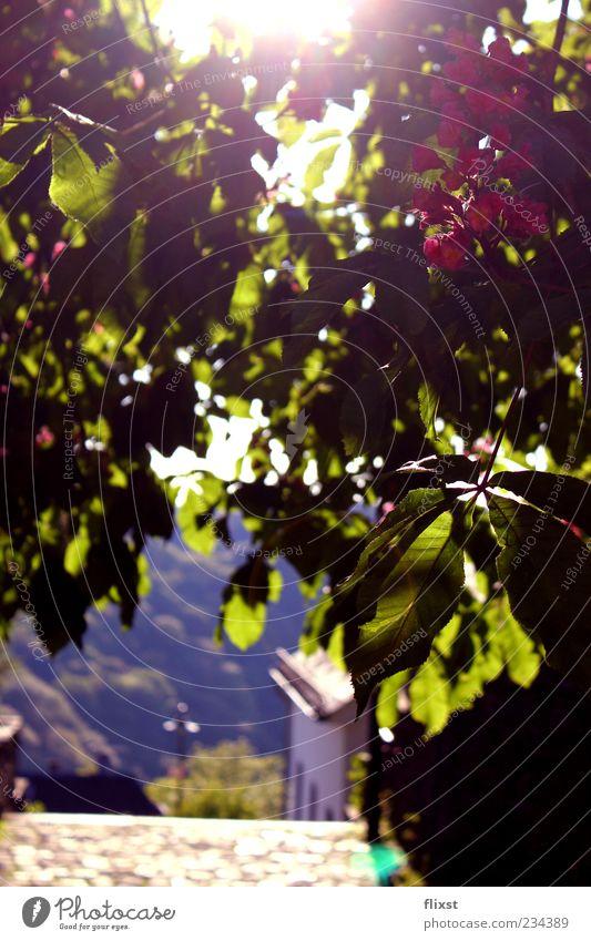 Frühlingsgefühl Natur Blatt Landschaft Wege & Pfade Frühling Gebäude Zufriedenheit Hoffnung Schönes Wetter Grünpflanze Blattadern Zweige u. Äste Frühlingsgefühle Blätterdach durchleuchtet