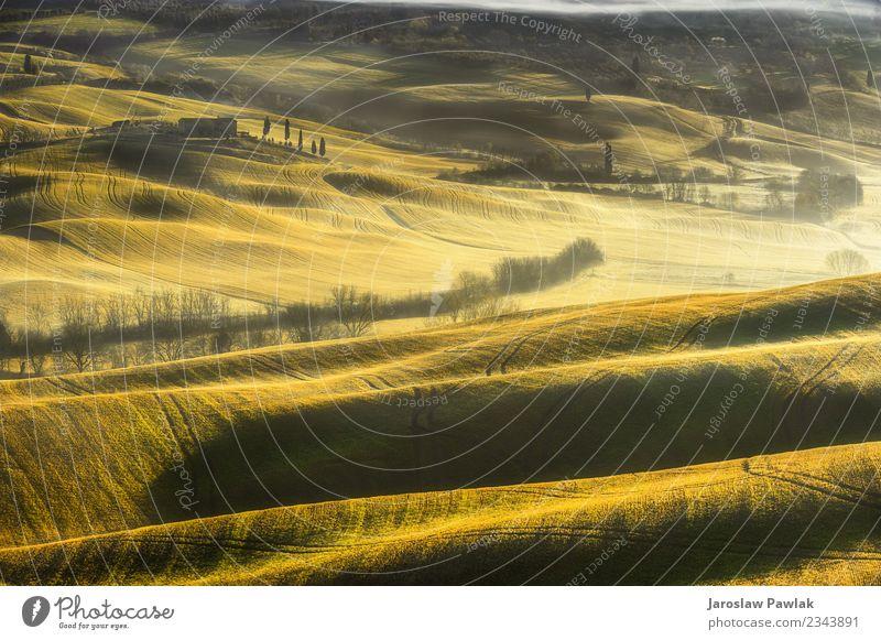 Toskana Frühlingsmorgen auf Nebelfeldern schön Ferien & Urlaub & Reisen Sommer Haus Garten Natur Landschaft Himmel Wolken Baum Gras Wiese Hügel Straße grün