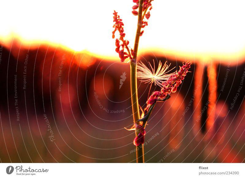 Durch die Blume Horizont Sonnenlicht Frühling Schönes Wetter Gras Wiese Zufriedenheit Frühlingsgefühle Romantik Farbfoto Nahaufnahme Textfreiraum links