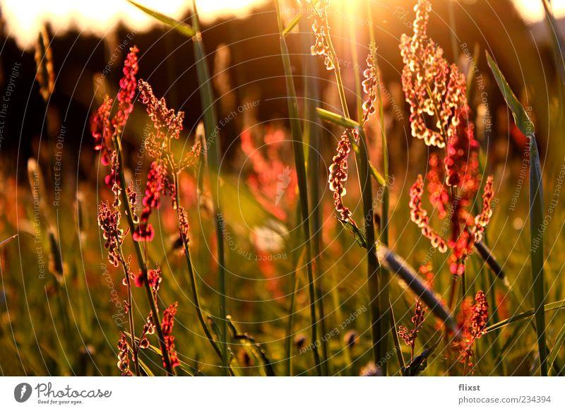 Frühlingsgeflüster 3 Sonnenaufgang Sonnenuntergang Schönes Wetter Blume Gras Wiese Zufriedenheit Frühlingsgefühle Optimismus Sehnsucht Romantik Farbfoto