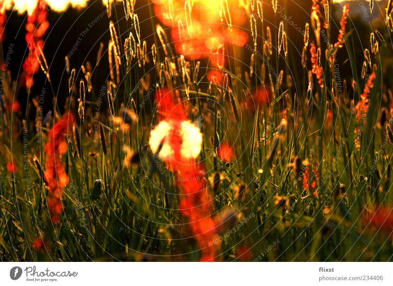 Frühlingsgeflüster 10 Minuten später Natur Wiese Gras Blüte Zufriedenheit Hoffnung Romantik Schönes Wetter Stengel Samen Optimismus Frühlingsgefühle Wiesenblume