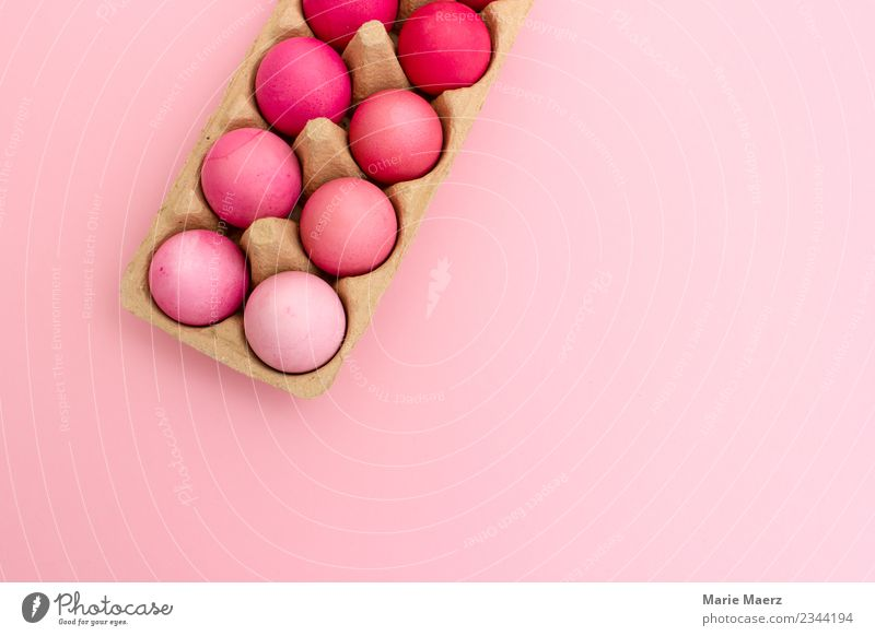 Eierschachlte mit rosa Ostereiern nach Farbe sortiert Design Ostern Essen machen Blick springen ästhetisch einfach trendy schön Freude April färben verschönern