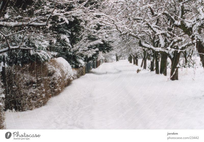 Ein Wintertag kalt weiß Baum Berge u. Gebirge Schnee Kamenz Wege & Pfade