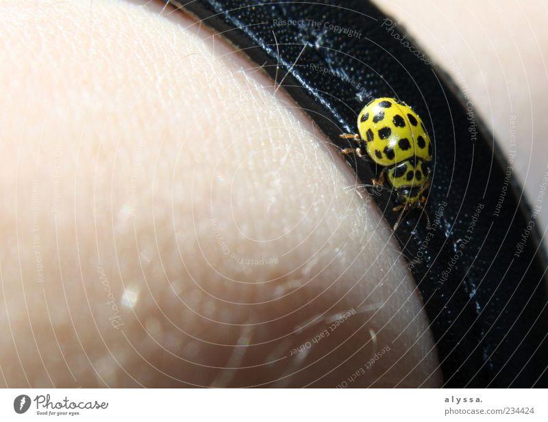 'n ganz Süßer. Tier schwarz gelb Haut Behaarung Käfer Leder krabbeln Marienkäfer Armband